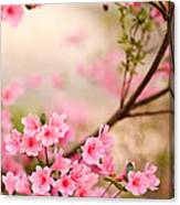 Pink Azalea Bush Canvas Print