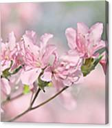 Pink Azalea Flowers In The Spring Canvas Print