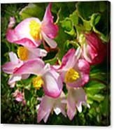 Pink Begonia Canvas Print