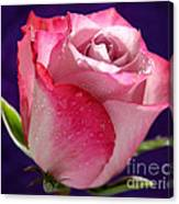 Pink Bliss Canvas Print