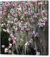 Pink Blossoms And Gray Moss Canvas Print