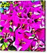 Pink Bouganvilla Canvas Print