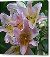 Pink Bridal Bouquet Canvas Print