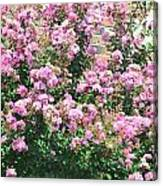 Pink Bush Canvas Print