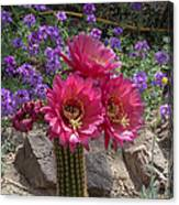 Pink Cactus Torch Canvas Print