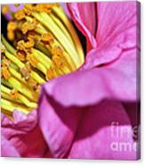 Pink Camellia And Stamen Canvas Print