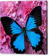 Pink Camilla And Blue Butterfly Canvas Print