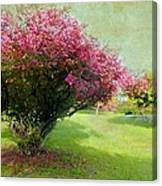 Pink Canopy Canvas Print