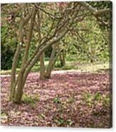 Pink Carpet In The Forrest Canvas Print