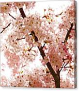 Pink Cherry Blossoms - Impressions Of Spring Canvas Print