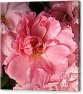 Pink Cluster Canvas Print