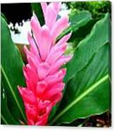 Pink Cone Ginger Canvas Print