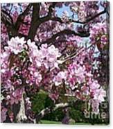 Pink Crabapple Canvas Print