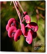 Pink Curls - Flower Macro Canvas Print