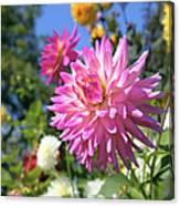 Pink Dahlia Flower Closeup Canvas Print