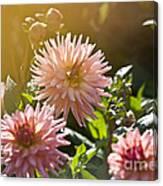 Pink Dahlia Garden Canvas Print