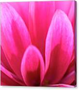 Pink Dahlia Petals Abstract Canvas Print