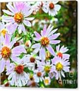 Pink Daisies Flowers Canvas Print