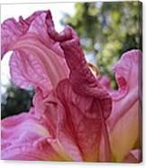 Pink Daylily Petal Canvas Print