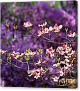 Pink Dogwood With Purple Azaleas Canvas Print