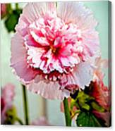 Pink Double Hollyhock Canvas Print
