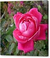 Pink Double Rose Canvas Print