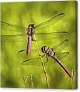 Pink Dragonflies Canvas Print