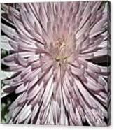 Pink Duvet Cover Canvas Print
