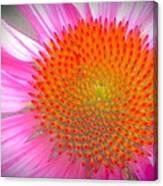 Pink Echinacea  Canvas Print