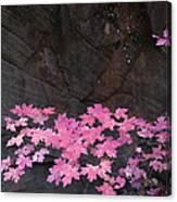 Pink Fall Colors In Sedona Arizona Canvas Print