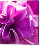Pink - Featured 3 Canvas Print