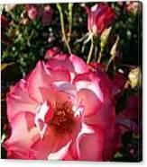 Pink Flaminco Rose 2 Canvas Print