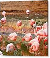 Pink Flamingos Resting Canvas Print