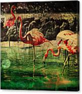 Pink Flamingos - Shangri-la Canvas Print