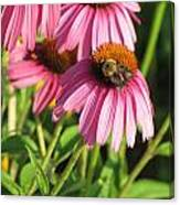 Pink Flower And Bee Canvas Print
