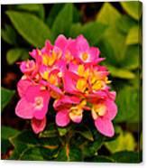 Pink Flower Austin Canvas Print