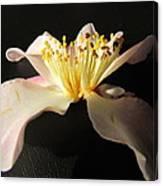 Pink Flower Azalea . Canvas Print