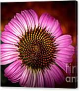 Pink Flower Blooming Canvas Print