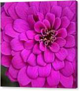 Pink Flower Blossoming Canvas Print