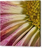 Pink Flower Macro Canvas Print