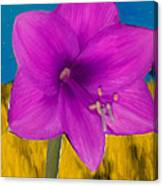 Pink Flower On A Fall Evening Canvas Print