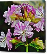 Pink Flower On Brier Island In Digby Neck-ns Canvas Print