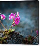 Pink Flower With Inkbrush Calligraphy Joyfulness Canvas Print