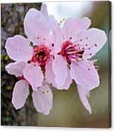 Pink Flowering Tree Floral Canvas Print
