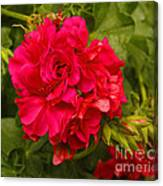 Pink Flowers Blooming Canvas Print