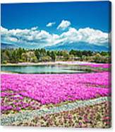 Pink Flowers Blue Sky Canvas Print