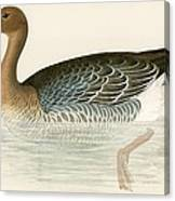 Pink Footed Goose Canvas Print
