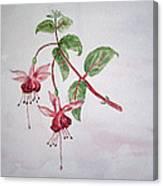 Pink Fuchsia's  Canvas Print