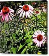 Pink Garden Canvas Print