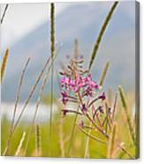 Pink Gem - Fire Weed Wildflower In Grand Teton National Park - Wyoming Canvas Print